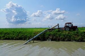 Per irrigare i campi