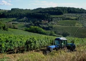 Nelle vigne dei Frescobaldi